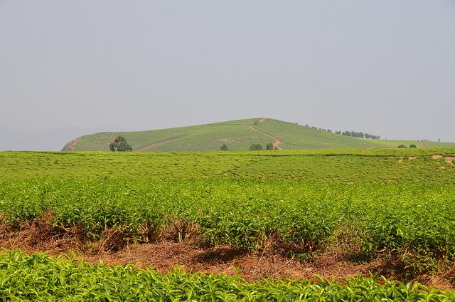 Ranch de Ndawara